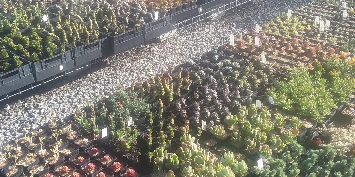 Trigg Plants