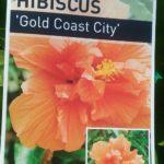 Hibiscus Gold Coast City Label